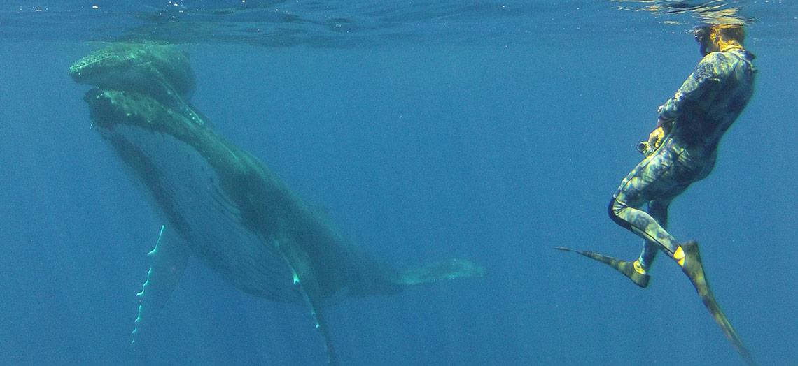 Humpback-Whales-Mounu-Island-Kingdom-of-Tonga